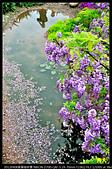 紫藤咖啡園:DSC_9563.JPG