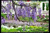 紫藤咖啡園:DSC_9606.JPG