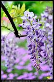 紫藤咖啡園:DSC_9663.JPG