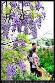 紫藤咖啡園:DSC_9571.JPG