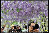 紫藤咖啡園:DSC_9609.JPG