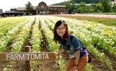 北海道旅遊:富良野 (24)