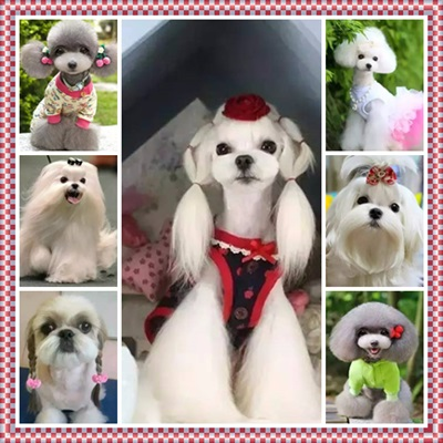 0.jpg - 送你漂亮的狗狗照片