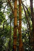 宜蘭棲蘭森林遊樂區:馬告生態公園棲蘭山莊 (42).JPG