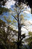 宜蘭棲蘭森林遊樂區:馬告生態公園棲蘭山莊 (47).JPG