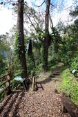 宜蘭棲蘭森林遊樂區:馬告生態公園棲蘭山莊 (28).JPG