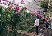 泰國清邁:013