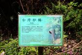 宜蘭棲蘭森林遊樂區:馬告生態公園棲蘭山莊 (32).JPG