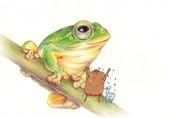 荒野台中20成年禮 :青蛙by變色龍.jpg