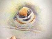 推廣講師:宣傳照-鳥.jpg