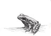 荒野台中20成年禮 :青蛙.jpg