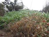 20121024菊島澎湖行之馬公湖西:1 350.jpg