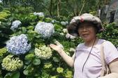 帶媽媽去看繡球花:DSC08676.JPG