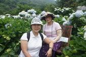帶媽媽去看繡球花:DSC08696.JPG