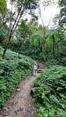 宜蘭礁溪抹茶山:65479.jpg