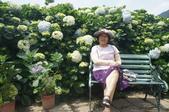 帶媽媽去看繡球花:DSC08677.JPG