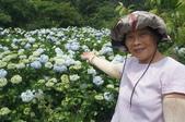 帶媽媽去看繡球花:DSC08686.JPG