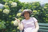 帶媽媽去看繡球花:DSC08678.JPG