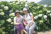 帶媽媽去看繡球花:DSC08679.JPG
