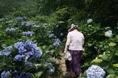 帶媽媽去看繡球花:DSC08683.JPG