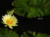 桃園荷花季-蓮花:DSC_8979.jpg
