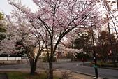 2017日本櫻花盛開:DSC_4822.jpg