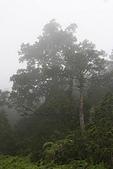 太平山2005/6/21:霧中樹影
