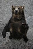 2005夏季北海道03Jul-07Jul:登別熊牧場1