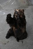 2005夏季北海道03Jul-07Jul:登別熊牧場2