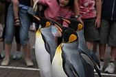 2005夏季北海道03Jul-07Jul:尼克斯海洋公園的企鵝