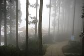 2007山上人家:濃霧中的森林咖啡