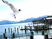2009.07.09赫連基姆湖宮:碼頭水鳥.JPG