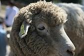 2006春節之清靜農場:羊咩咩