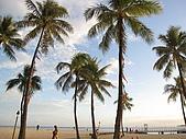 2月ALOHA~:0206夏威夷我最愛的棕櫚樹阿~