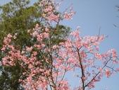 旅遊紀錄:花而開了農場