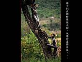 人體藝術與自然結合:原始部落人與自然結合藝術004.JPG