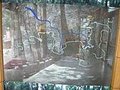 拉拉山巨木區:20100719拉拉山s001.jpg