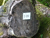 拉拉山巨木區:20100719拉拉山s005.jpg