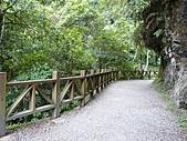 拉拉山巨木區:20100719拉拉山s006.jpg