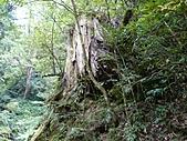 拉拉山巨木區:20100719拉拉山s008.jpg