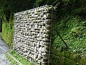 拉拉山巨木區:20100719拉拉山s009.jpg