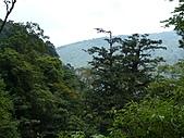 拉拉山巨木區:20100719拉拉山s010.jpg