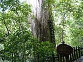 拉拉山巨木區:20100719拉拉山s011.jpg