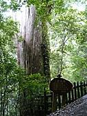 拉拉山巨木區:20100719拉拉山s012.jpg