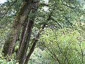 拉拉山巨木區:20100719拉拉山s015.jpg