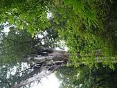 拉拉山巨木區:20100719拉拉山s017.jpg