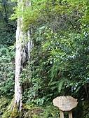 拉拉山巨木區:20100719拉拉山s018.jpg