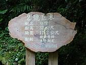 拉拉山巨木區:20100719拉拉山s019.jpg