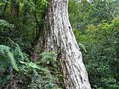 拉拉山巨木區:20100719拉拉山s020.jpg