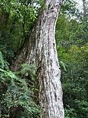 拉拉山巨木區:20100719拉拉山s021.jpg